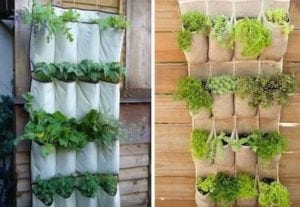 חביתותים שקי קיר ירוק