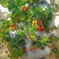 ירקות חורף - מה שותלים בחביתותים?