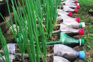 10 דרכים לגדל ירקות אורגניים במרפסת או בגינה